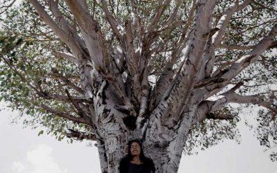 Von Bäumen und Menschen — in derStadt
