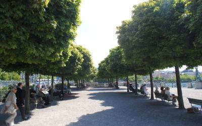 Sag mir, wo die Bäume sind .… — Frei- und Grünraumstrategien für die Zukunft